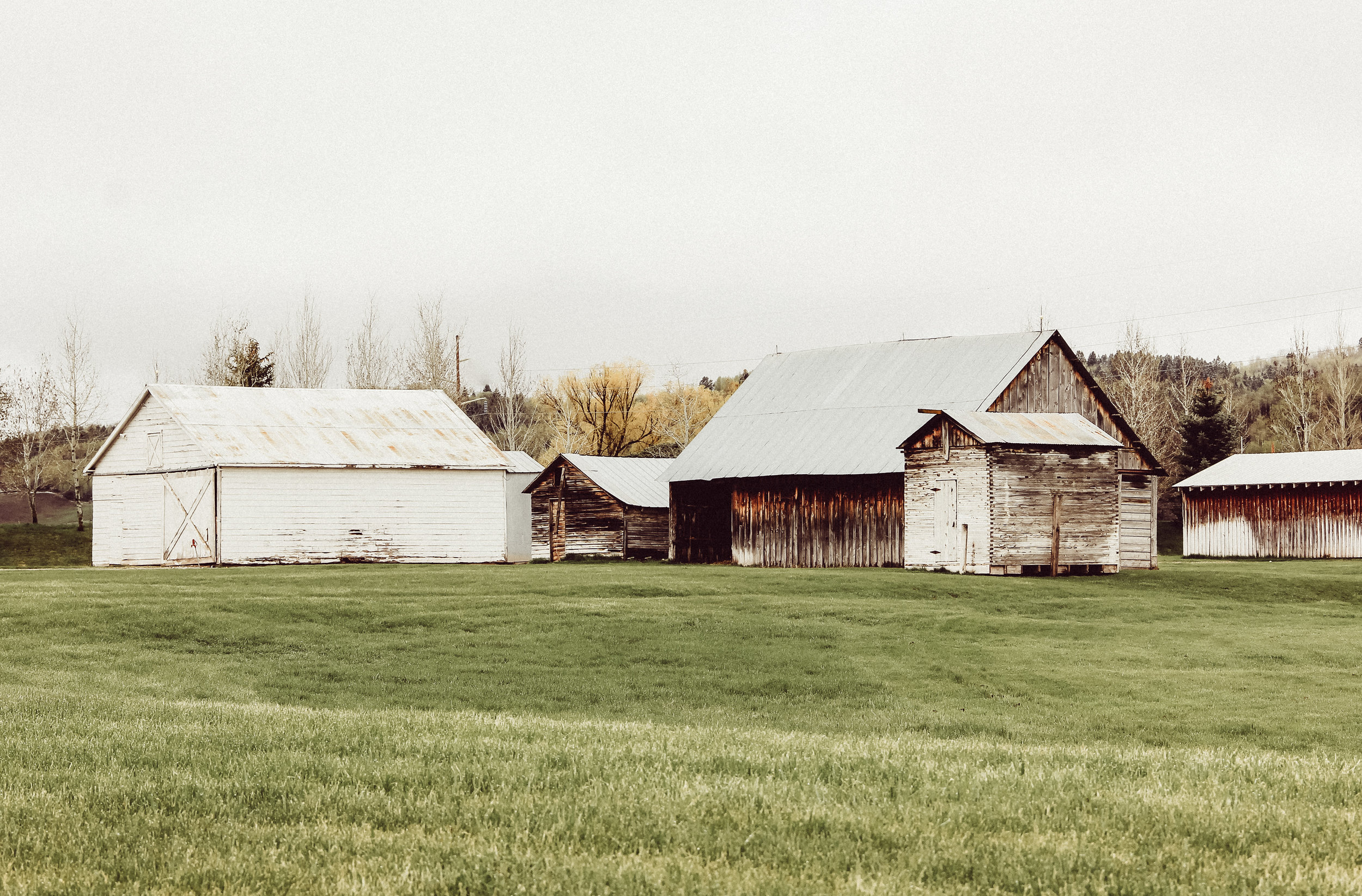 The barns at Jackknife Creek Ranch