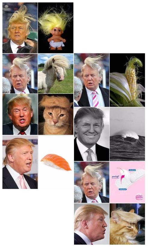 The Donald.jpg