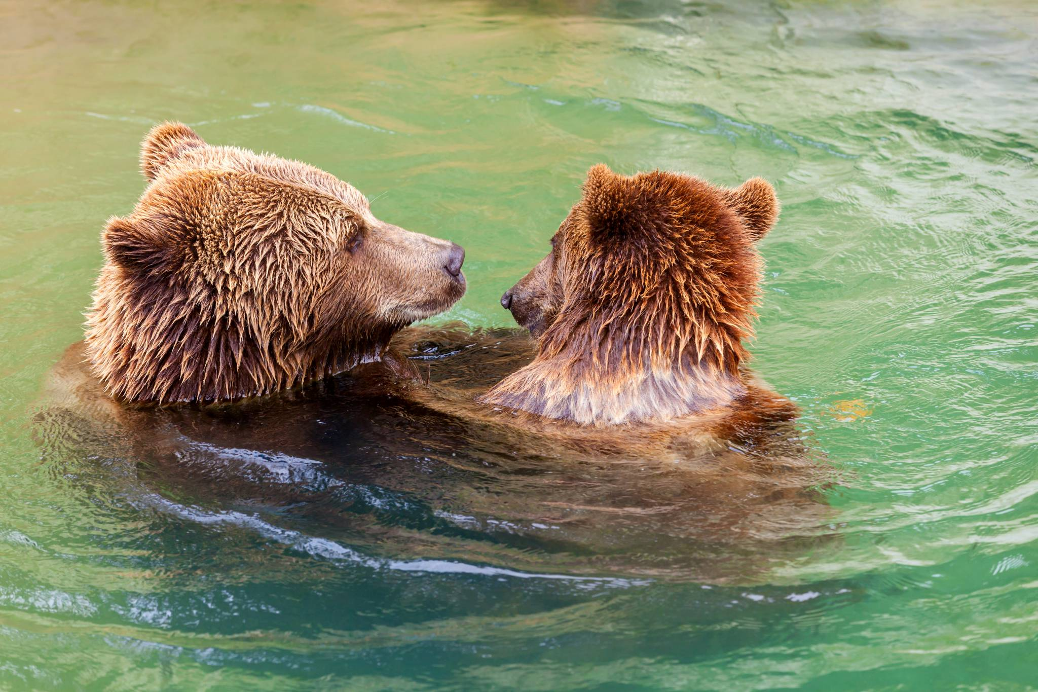 So sweet! Bern BearPark!
