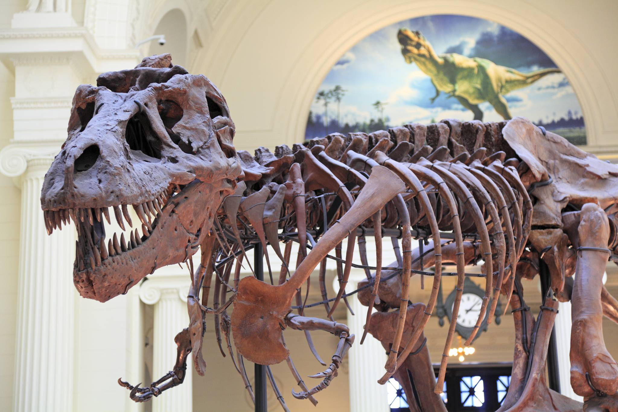 American Museum of Natural History Guide for iPhone, iPad & AppleWatch