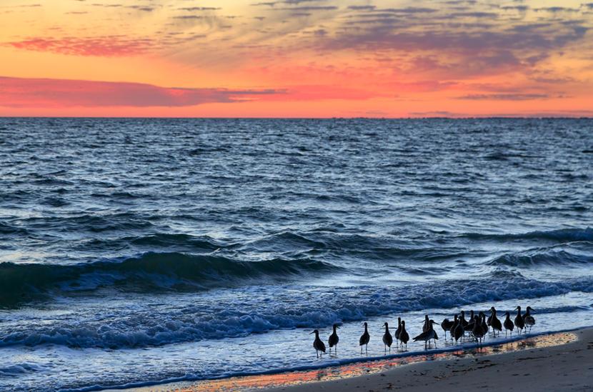CoastalResortCommunities_beach-plovers.jpg