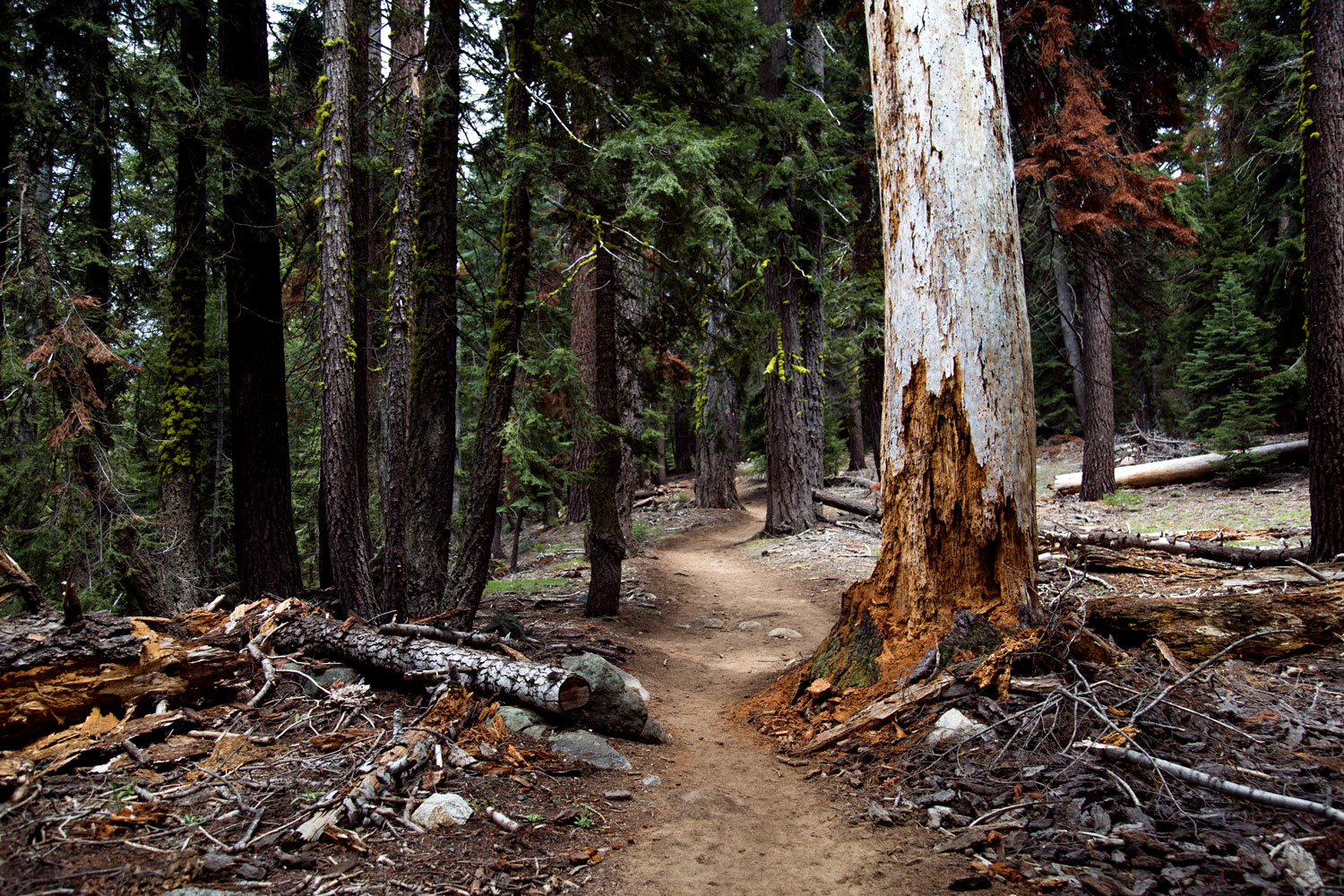 sequoia-national-park-3.jpg