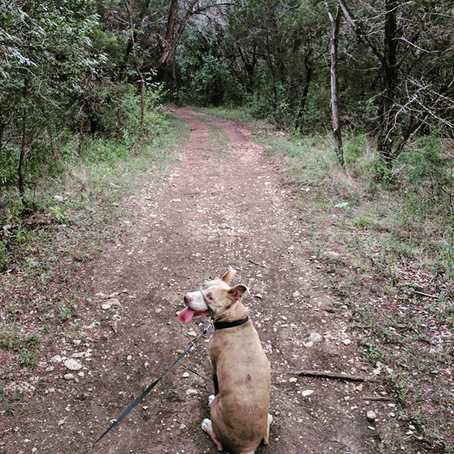 We found a new offshoot of the trail near our house tonight, then got drenched by an unexpected rain shower. It was lovely. #microadventure #trails #nature #explore #pitmix