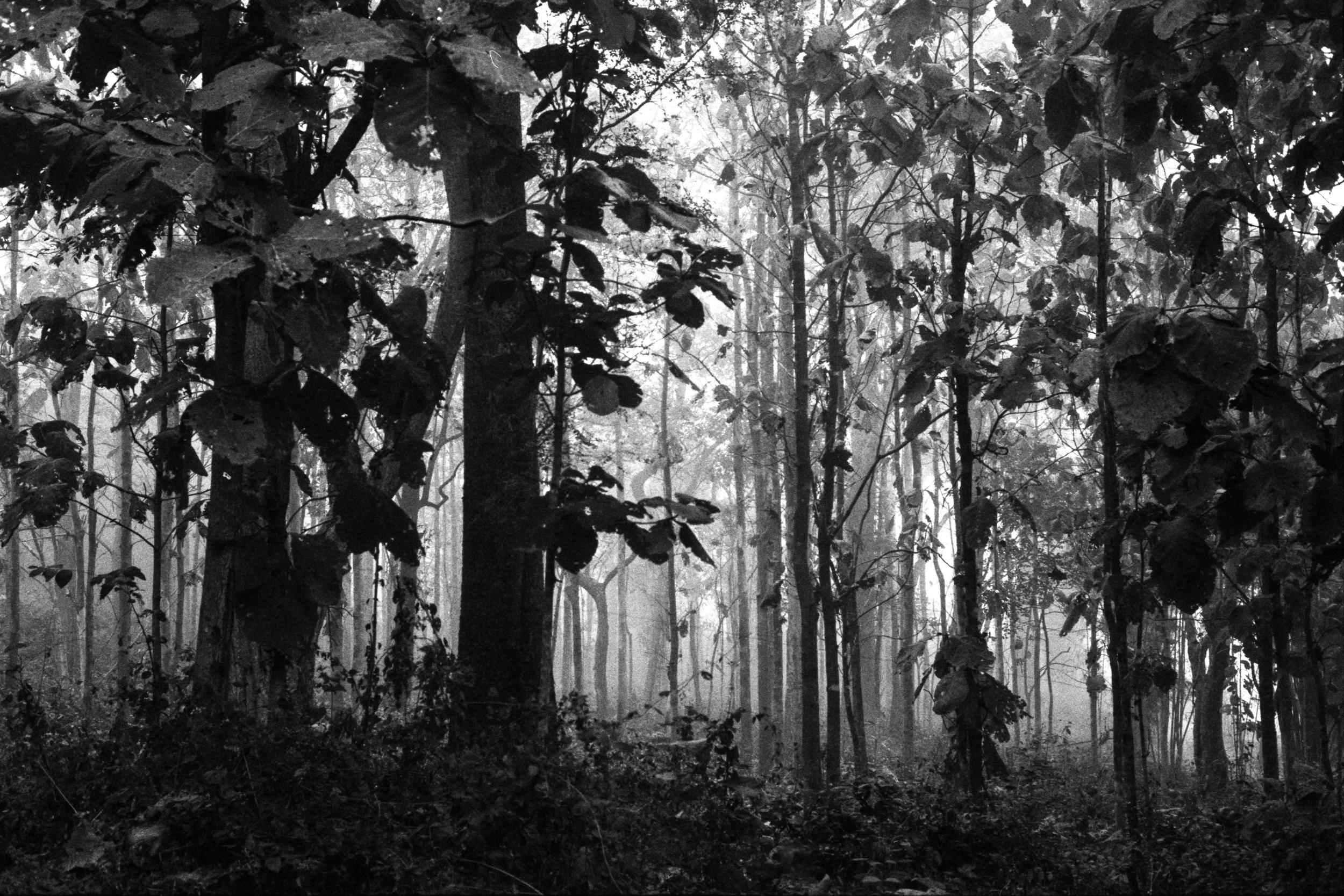 Thailand 2 Pai Forest.jpg