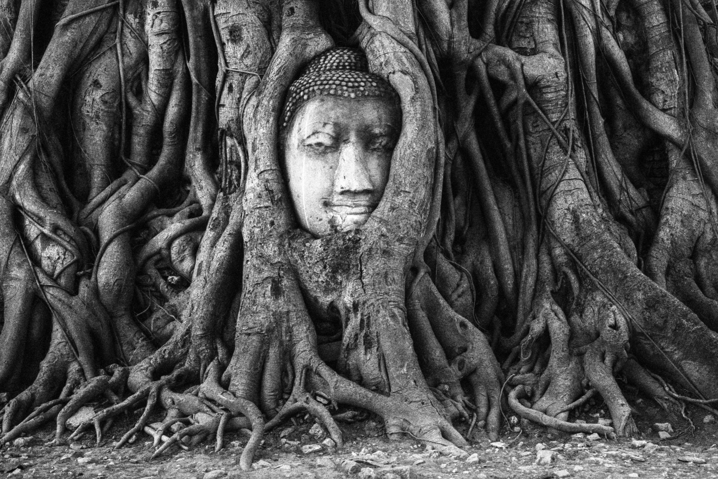 Thailand 12 Buddha Tree.jpg