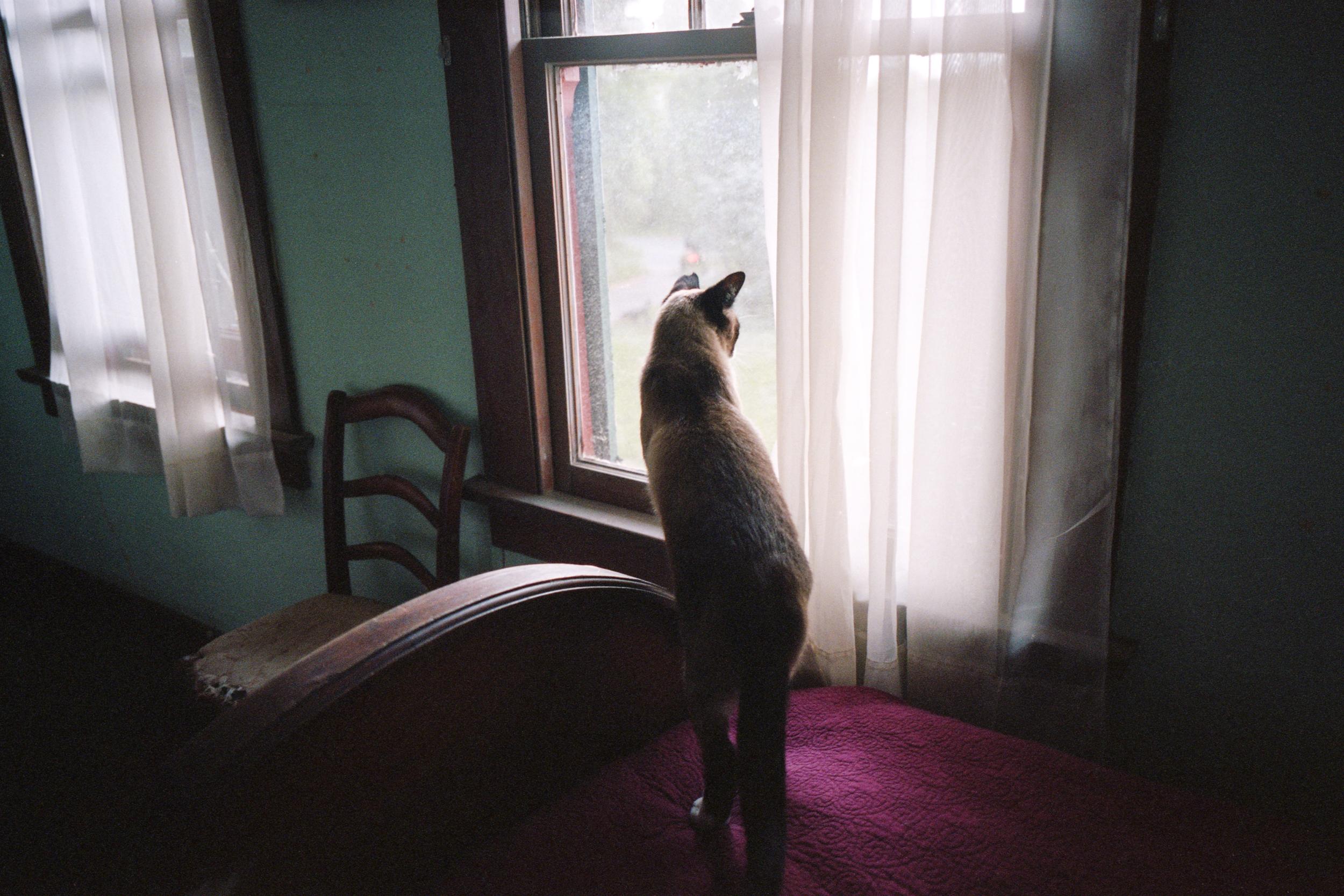 Ingel Haven 7 Cat in the Window.jpg