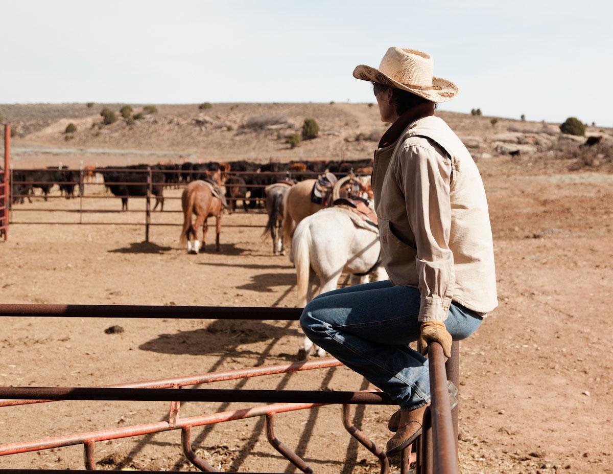 CowBranding_04.jpg