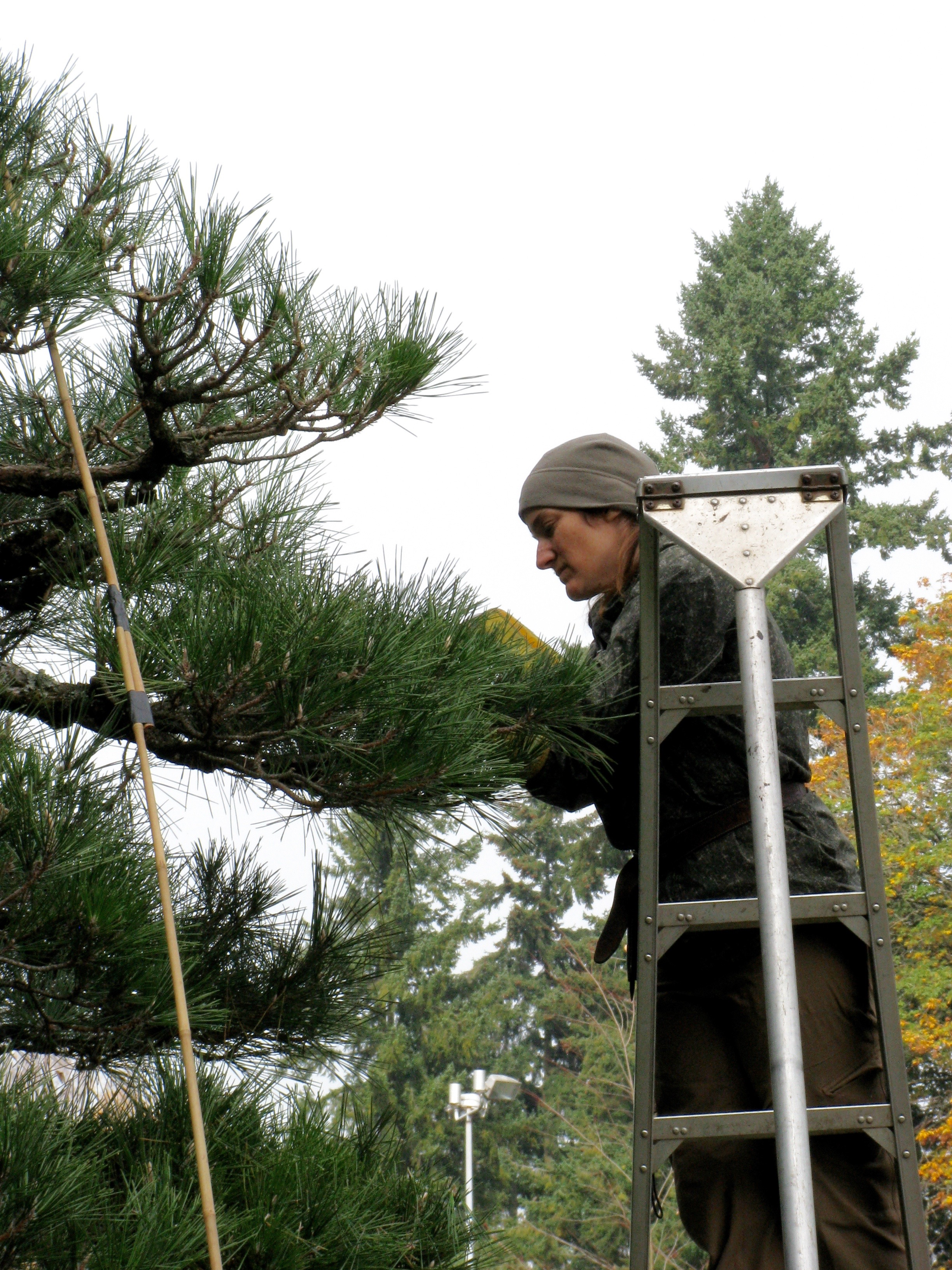 Hashigo, ladder