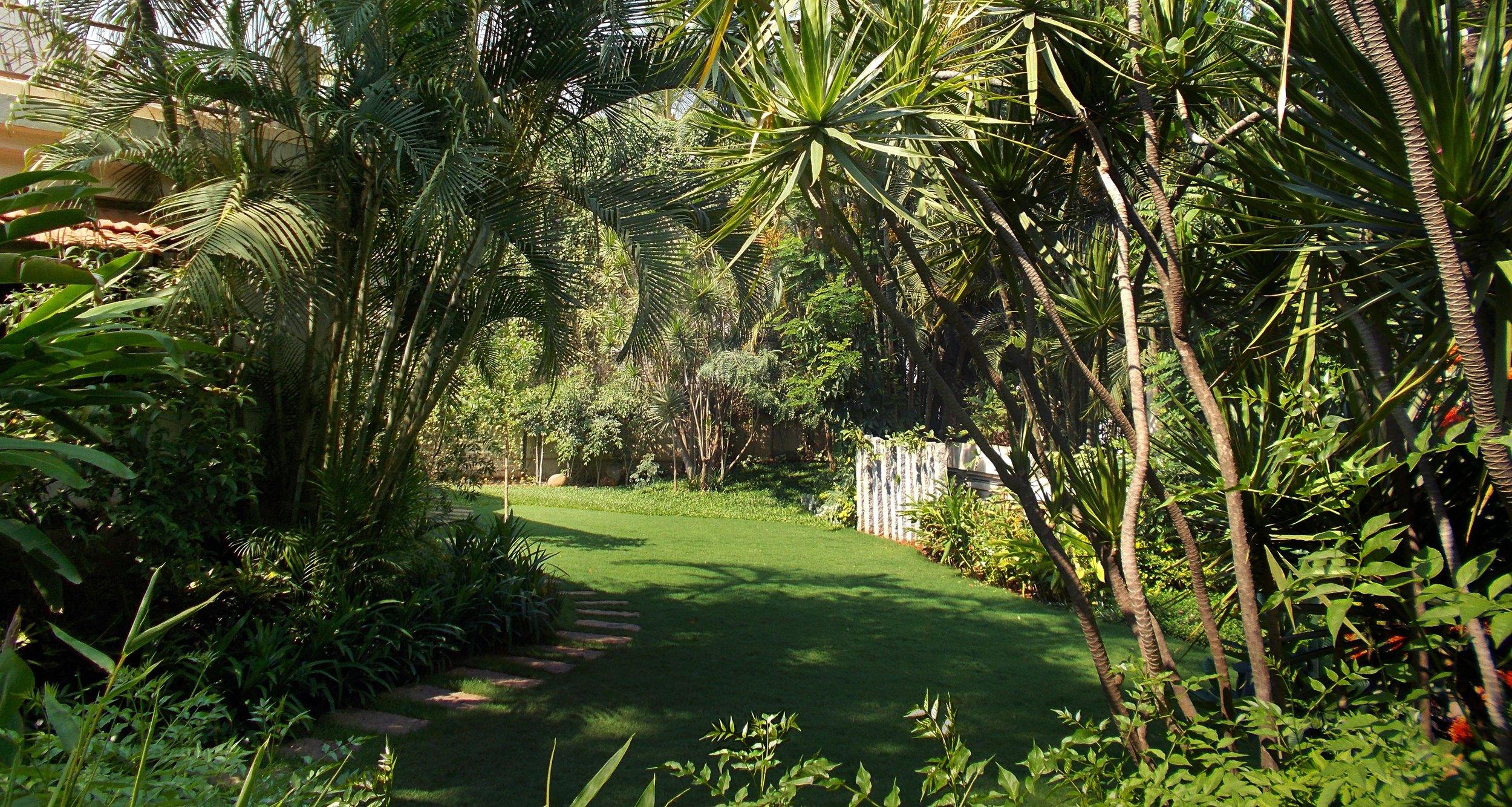 Ficus-landscape-bangalore-villa-kanak-backyard-garden-02