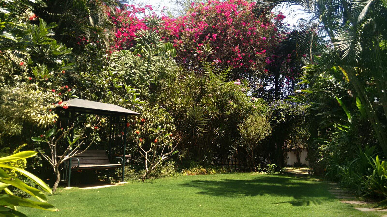 Ficus-landscape-bangalore-villa-kanak-garden-01