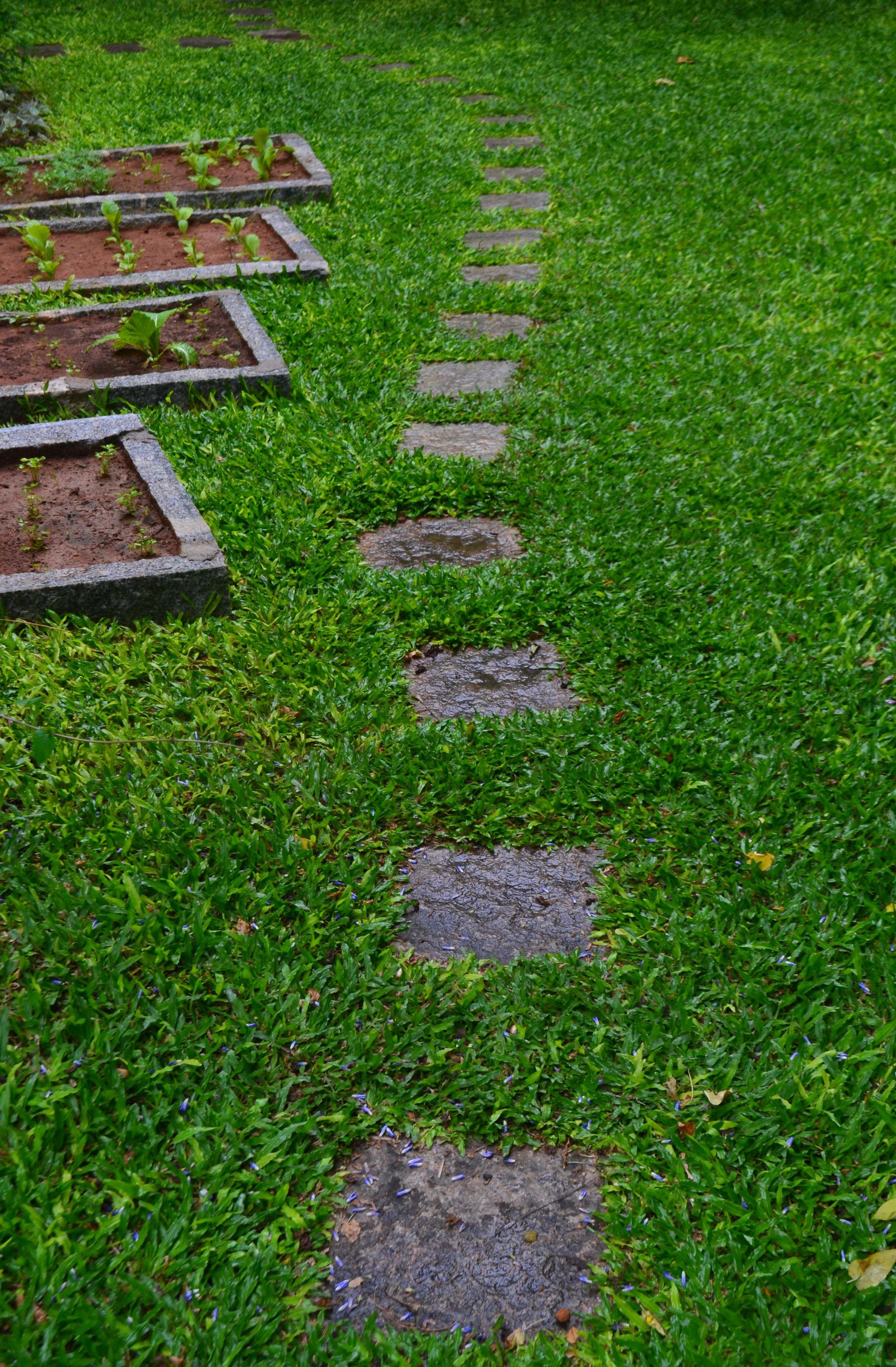 Ficus-landscape-bangalore-villa-kanak-garden-stepping stones-03