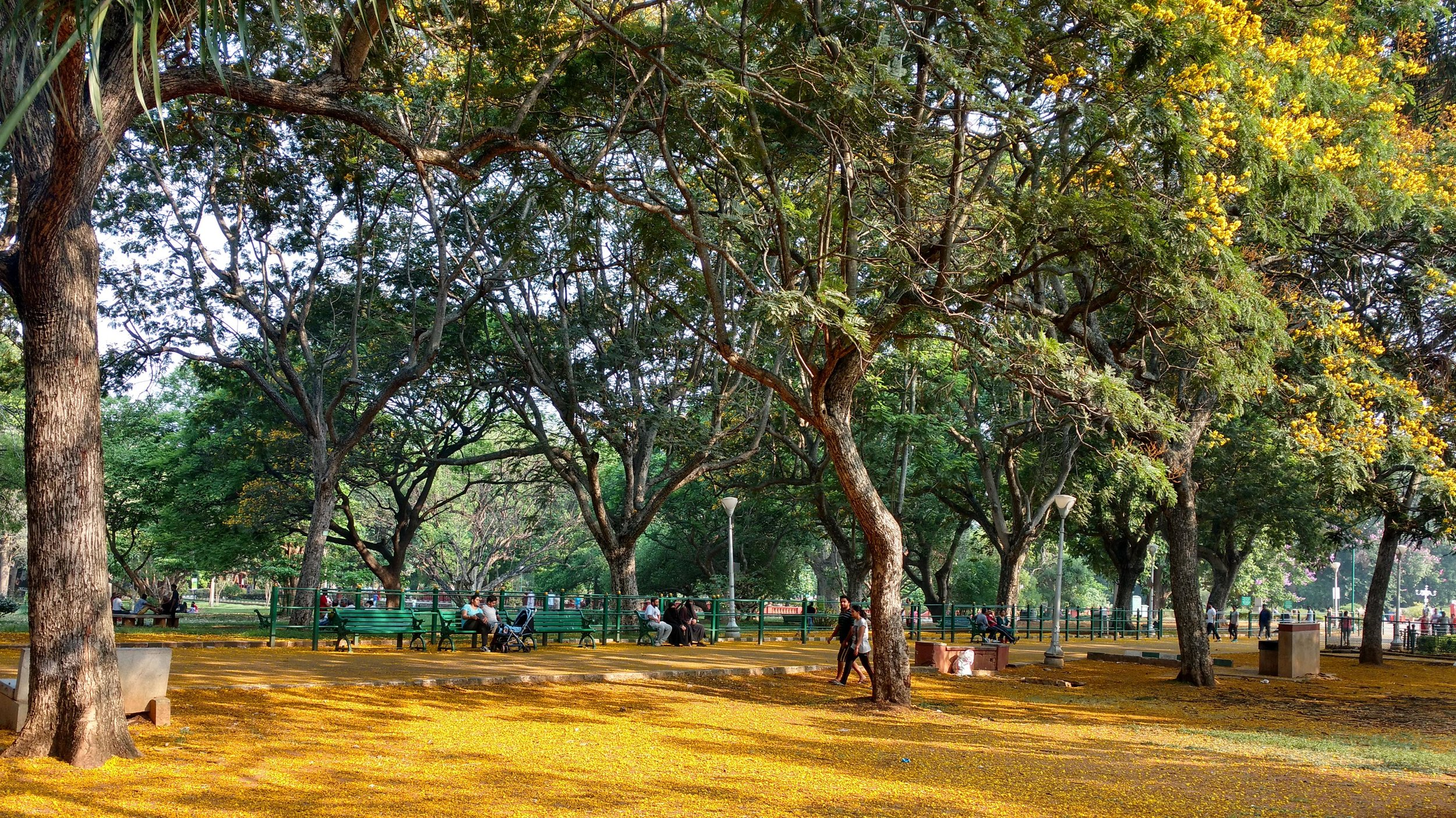 Lalbagh Botanical gardens today
