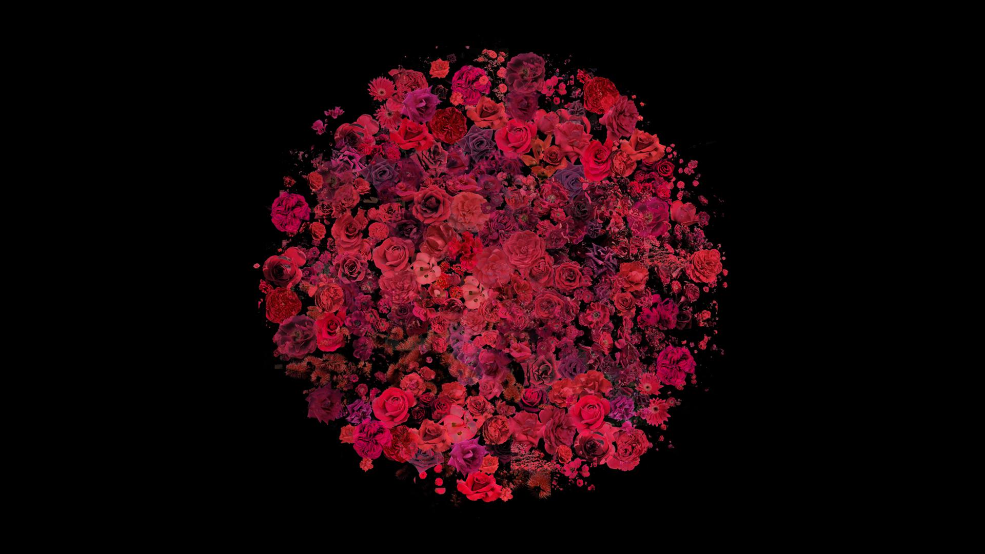 flower-option-2-experiment.jpg
