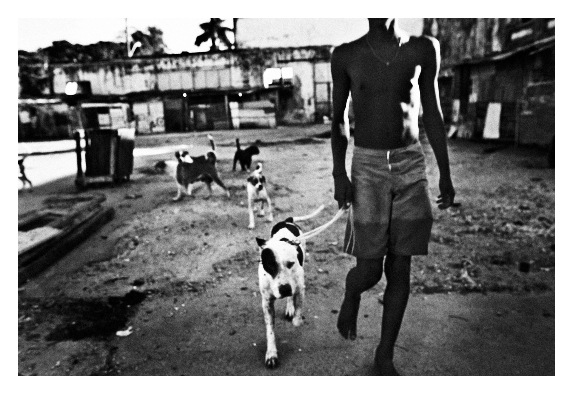 SALVADOR DE BAHIA, BRAZIL ? DECEMBER 10, 2009: A boy with a fighting dog in the courtyard of the factory before start the fight, on December 10, 2009 in Salvador de Bahia, Brazil. Despite the lack of socio-economic support from the government, they have managed to make a safe place for themselves to live, and form a community of their own, which is safer that the alternatives available to them. However they are currently being evicted by the government due to being there illegally.