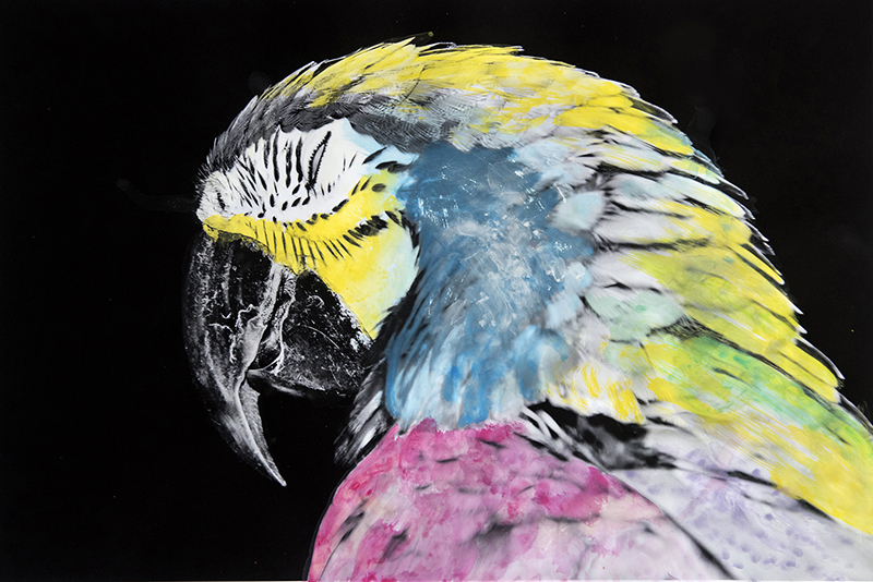 June 2016, The parrot with its squinting eye half open was the beginning of the project; a 'tropical' symbol for colors. It was later colored by an achromatope not aware of which colors she was using (yet applying them quite correctly).