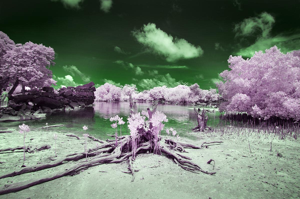 1200_DSC1432 green.jpg