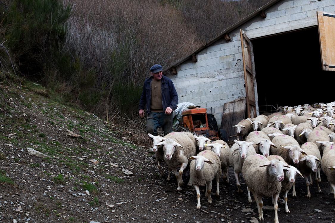 Fabien Chaptal, a shepherd, leads his animals off their sheepfold. Mivajols, February 22, 2016. Livestock farming is a traditional activity and an important economic sector in the Cévennes. Due to the isolation of the region and the rugged landscapes, small-scale farming and local distribution are widespread.