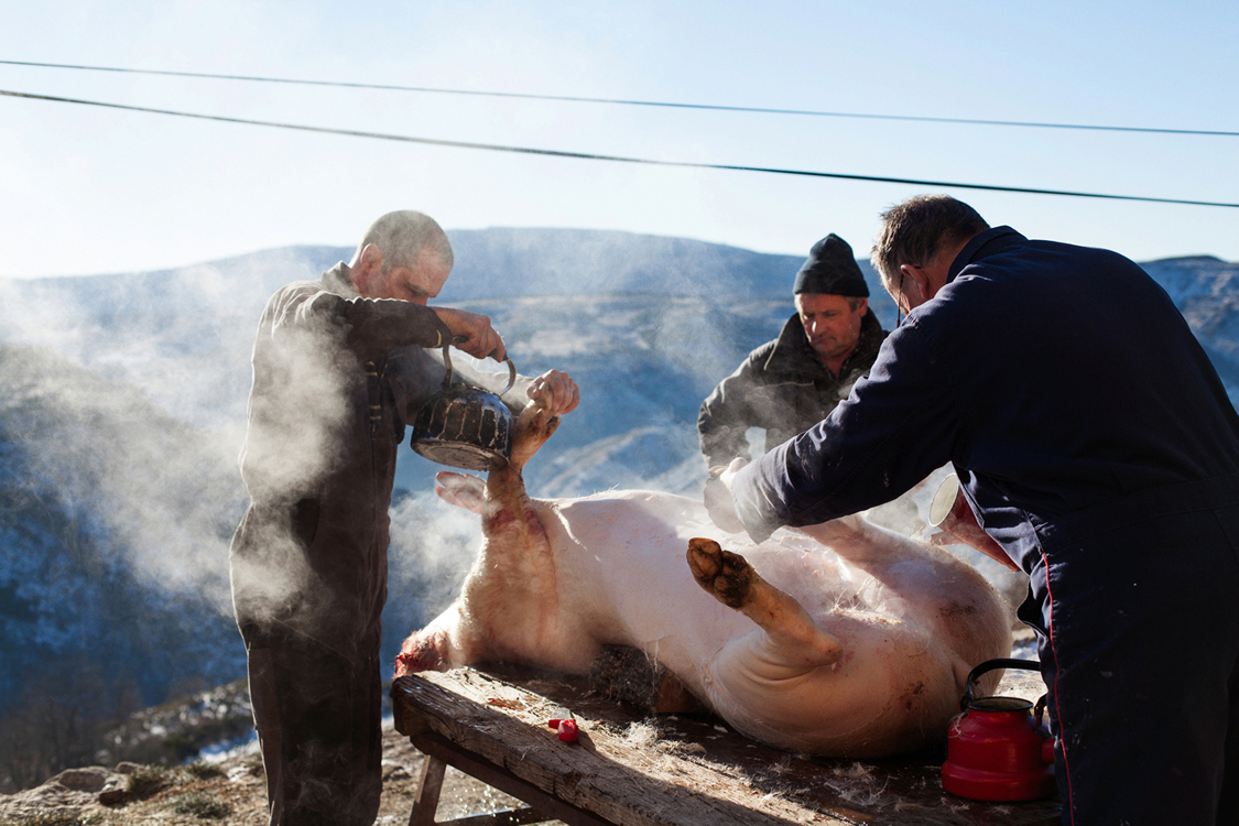 "Yves Commandré (c.) and two friends prepare a pig. Fraissinet de Lozère, January 19, 2017. The tradition of the ""tue-cochon"", though not specific to the Cévennes, is widely practiced in the farms of the region. Cheap, token of quality and environmentally-friendly, it is a traditional way to ensure meat for the coming months. The Cévennes were isolated for centuries and a land of resistance through history, and its inhabitants developed a sense of self-sufficiance, mostly in harmony with their surrounding environment."