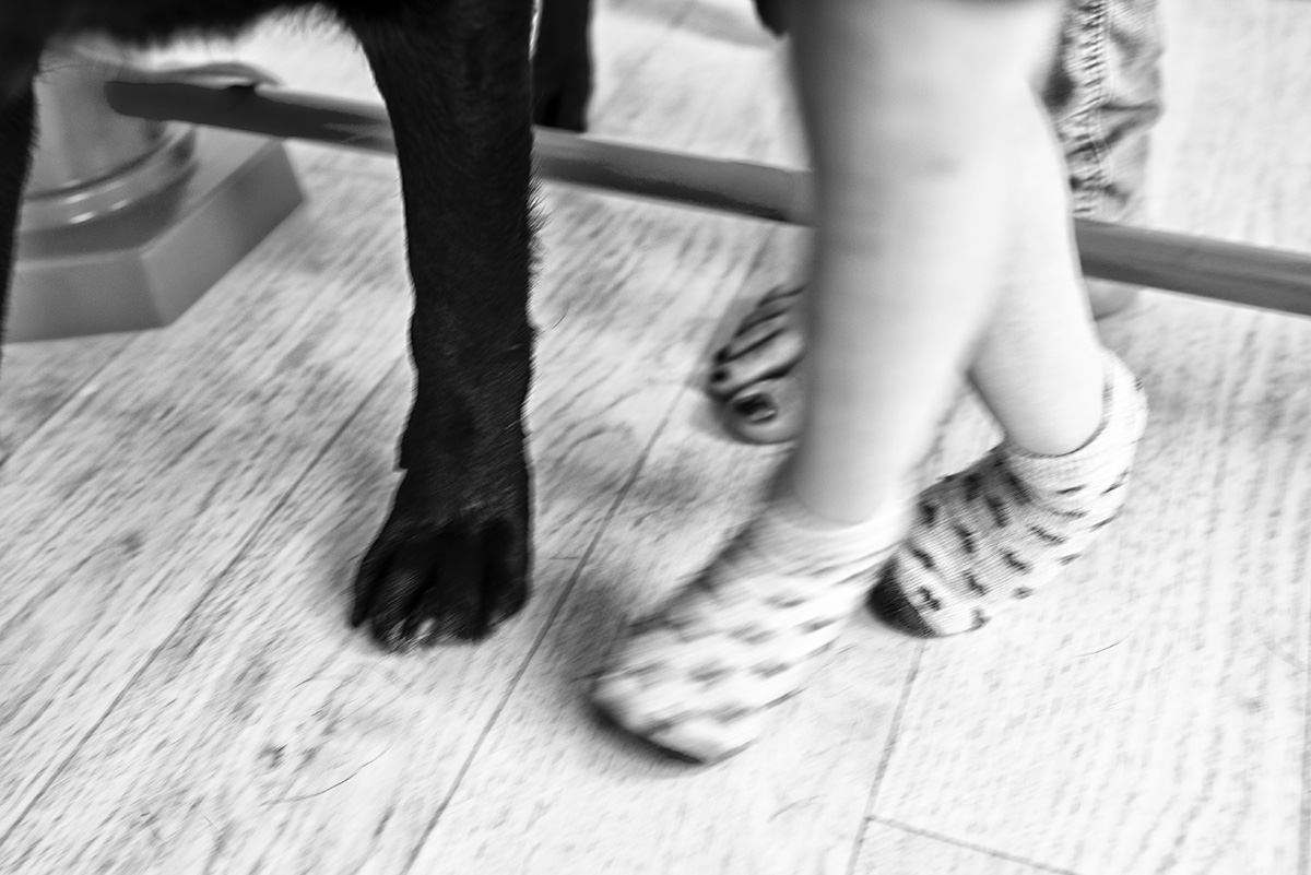 """photo from the project """"Lullabies for Alyona"""" Karaganda 2017The lesson with a child and dog in the center of K9therapy"""