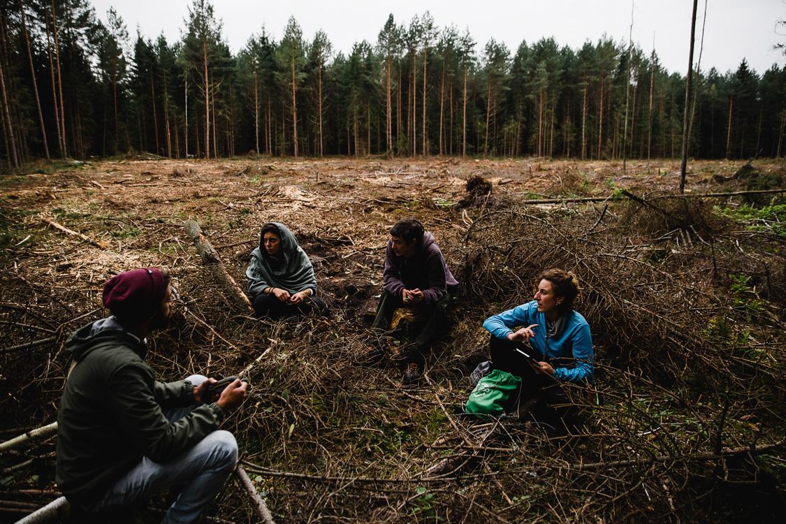 Logging world heritage