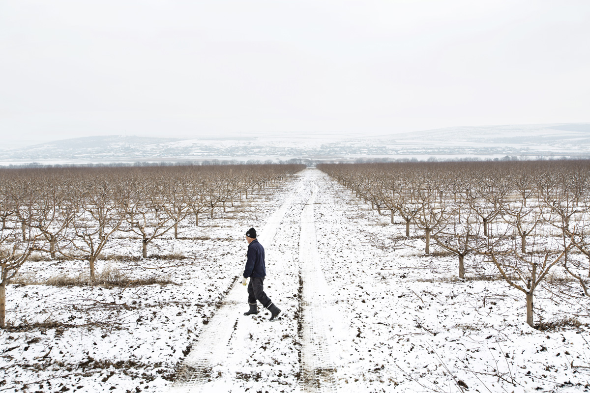 Beshalma, Gagauzia. Moldova - Februrary 2018Orchard of 36 hectares in which about 17 people work for a month to prune about 45 thousand apple trees. Workers can prune up to a thousand trees a day and about 10 euro cents are paid for each tree.
