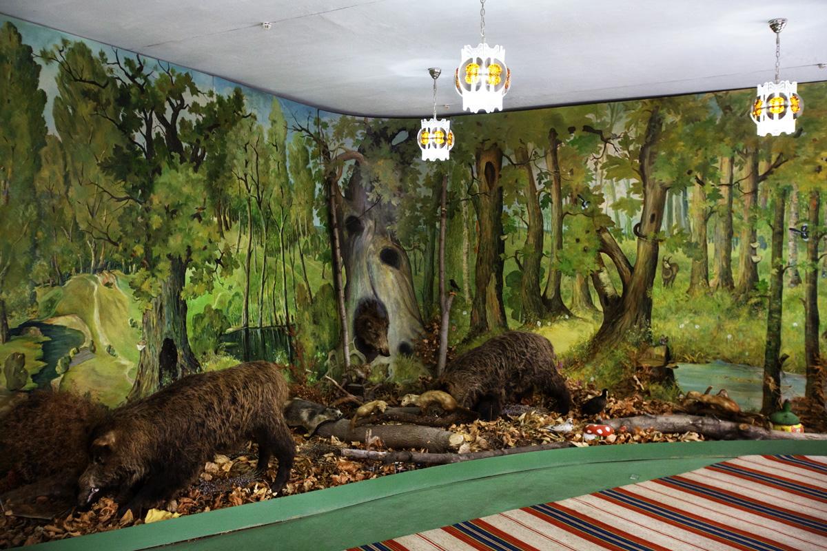 Comrat, Gagauzia. Moldova - Februrary 2018One of the room at the National Museum of Histoy and Ethnography in Comrat where is represented the fauna which is present in the territory of Gagauzia.