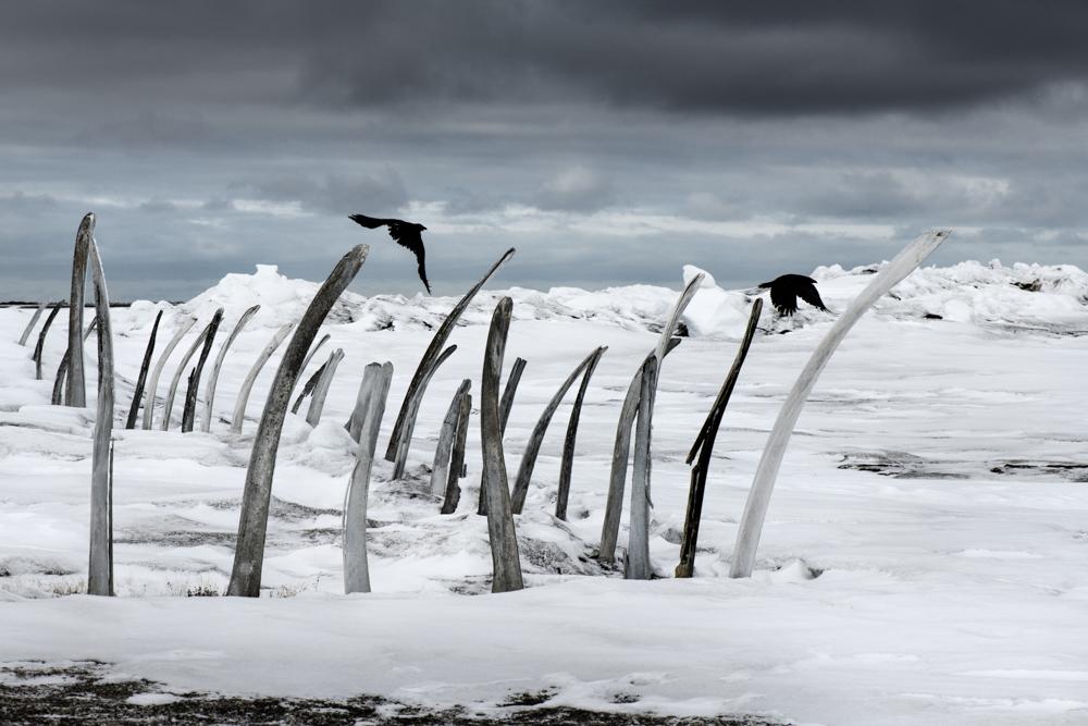 Kadir van Lohuizen / NOOR Arctic, Alaska, Point Hope, whale hunt