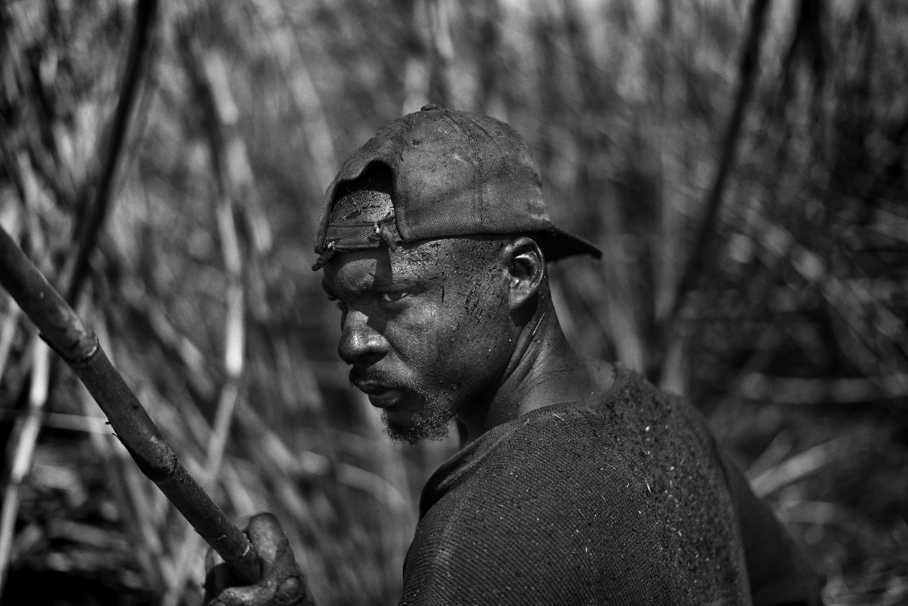 Modern Day slavery, sugarcane in the Dominican Republic