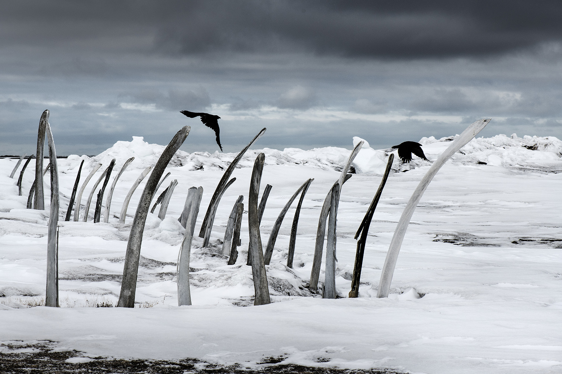USA, Alaska, Tikigaq (Point Hope), May 2018
