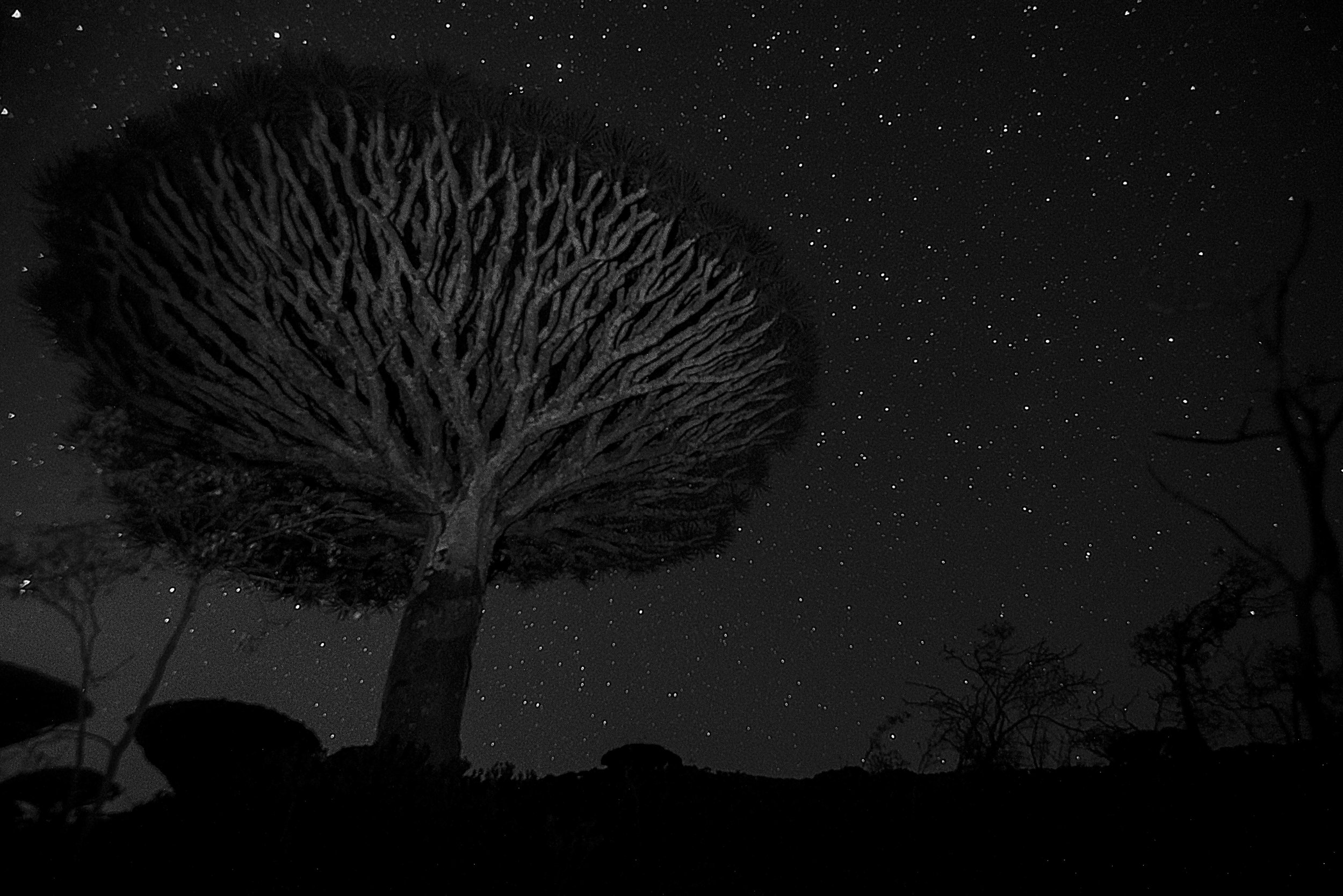 Project Socotra: The invisible Island February 2019 Night view from the Dragon Blood Tree forest.