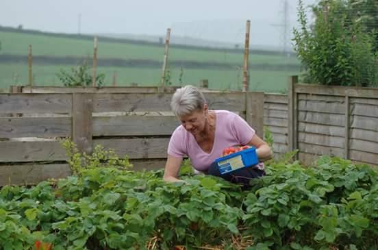 Strawberry picking.jpg