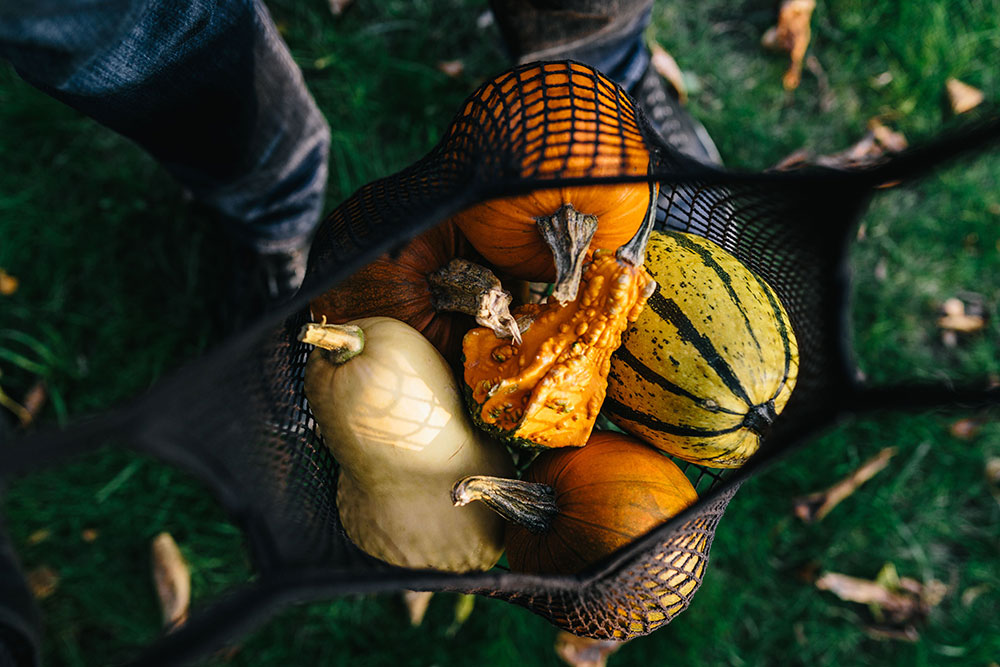 autumn-vegetables-squash-pumpkin-minehead-farmers-market.jpg
