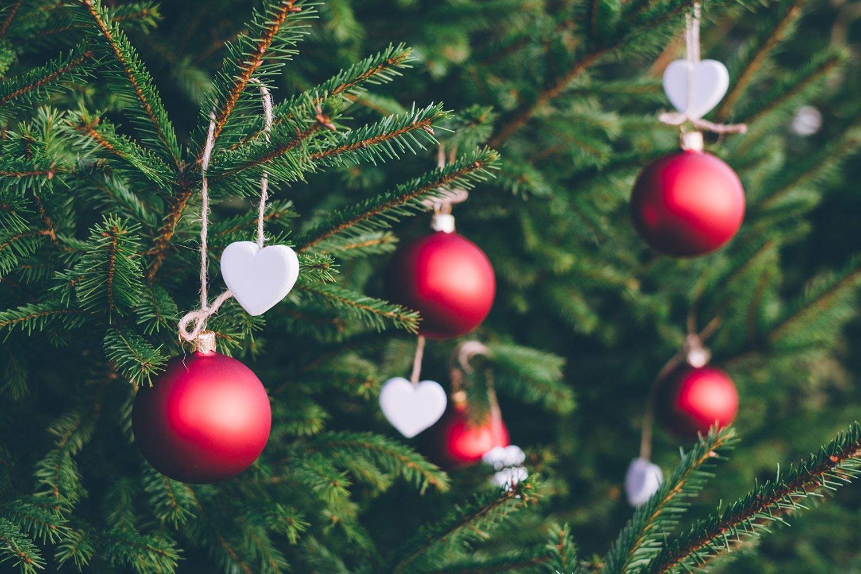 minehead-farmers-market-exmoor-plant-centre-christmas-trees.jpg