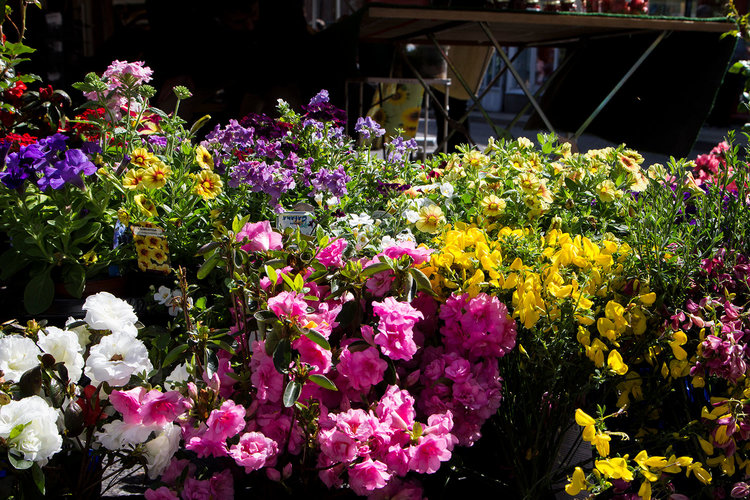 minehead-farmers-market-exmoor-plant-centre-local-food-produces-somerset-farmers-market.jpg