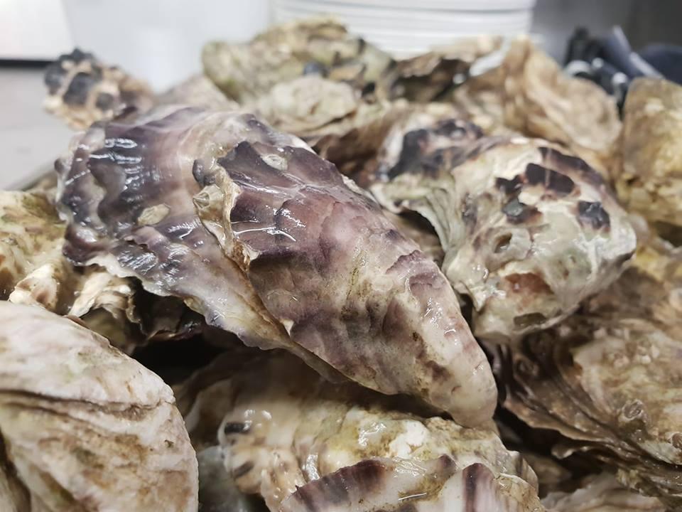 Oysters 2 .jpg