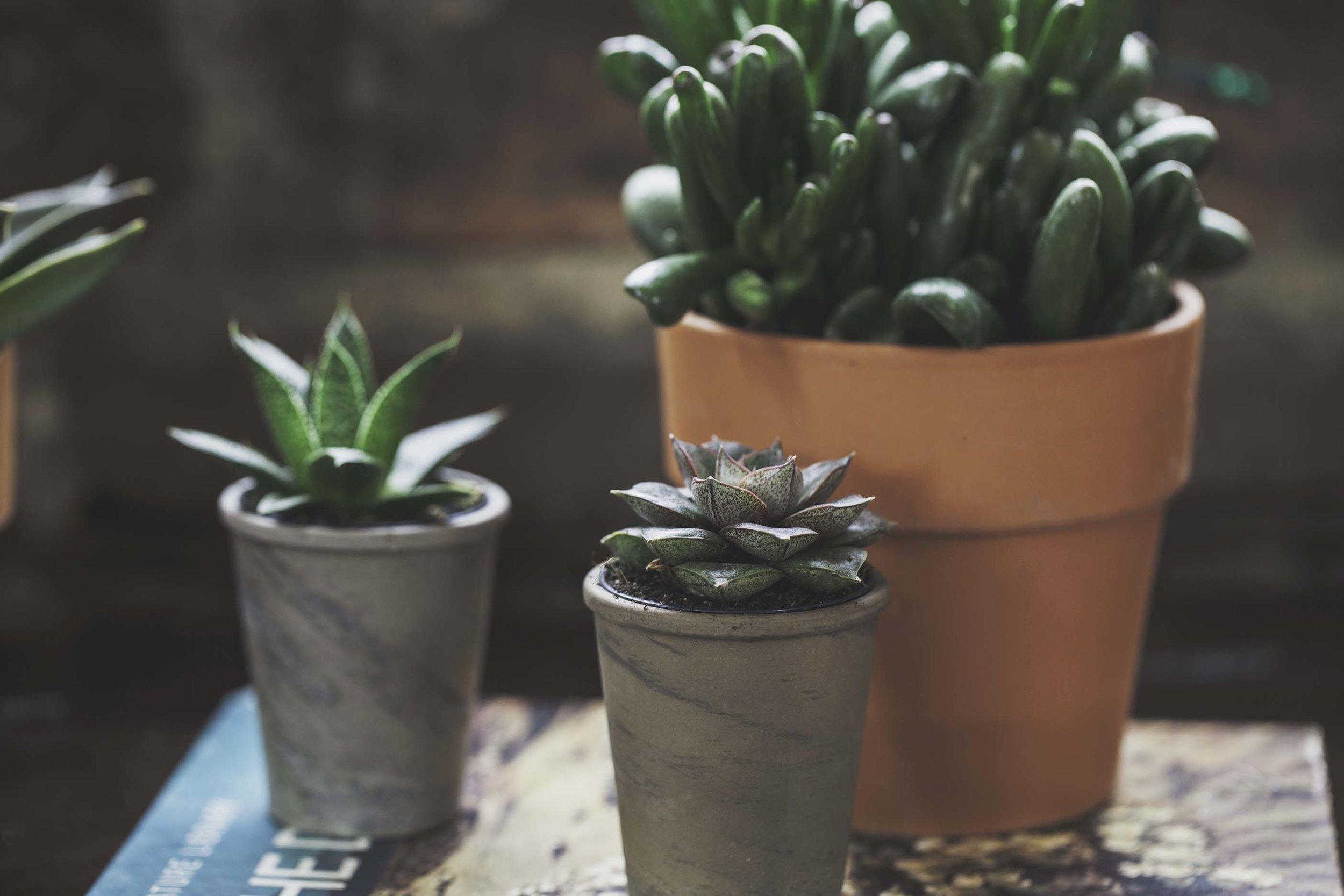 Own Succulents.jpg