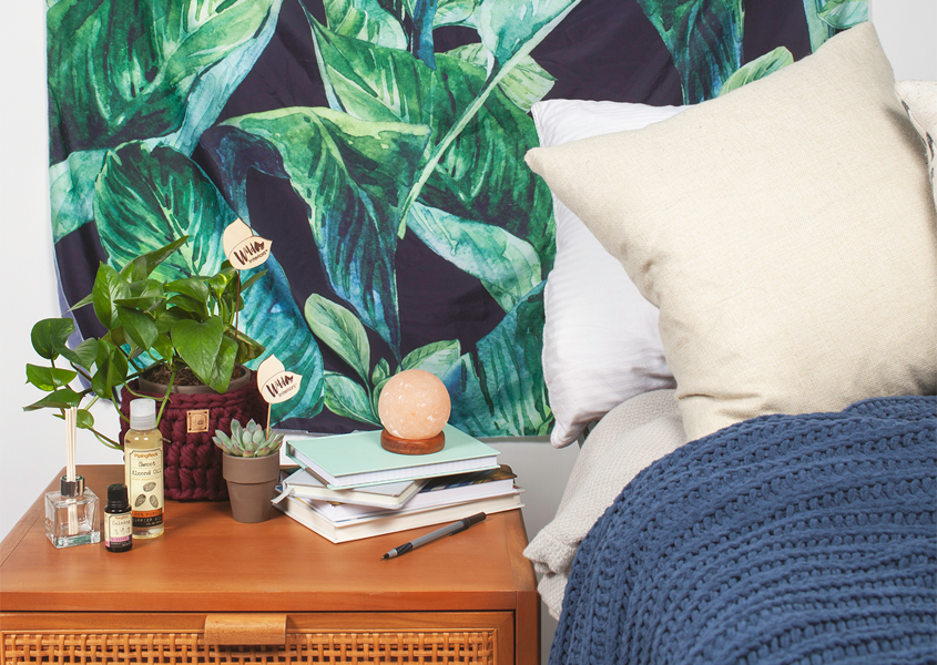 5 Best Plants for Your Dorm Room.png