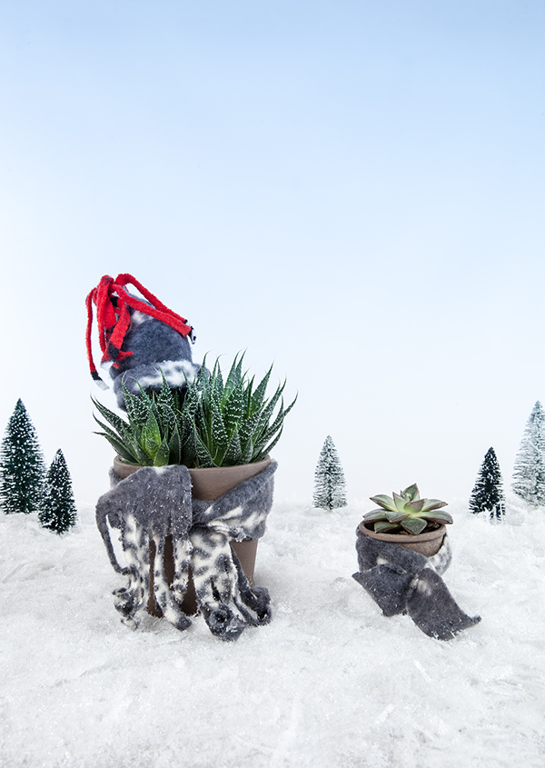Be sure to keep your plants warm and cozy this winter.