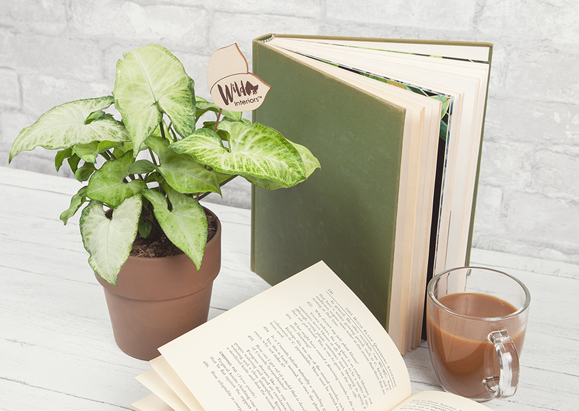 Heart-shaped leaves, a favorite hot beverage, and a good book - perfect!