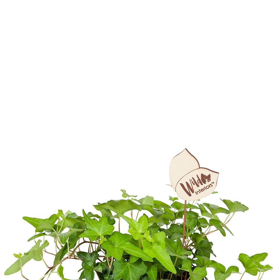Haworthia, Gasteria, Aloe_minis.jpg