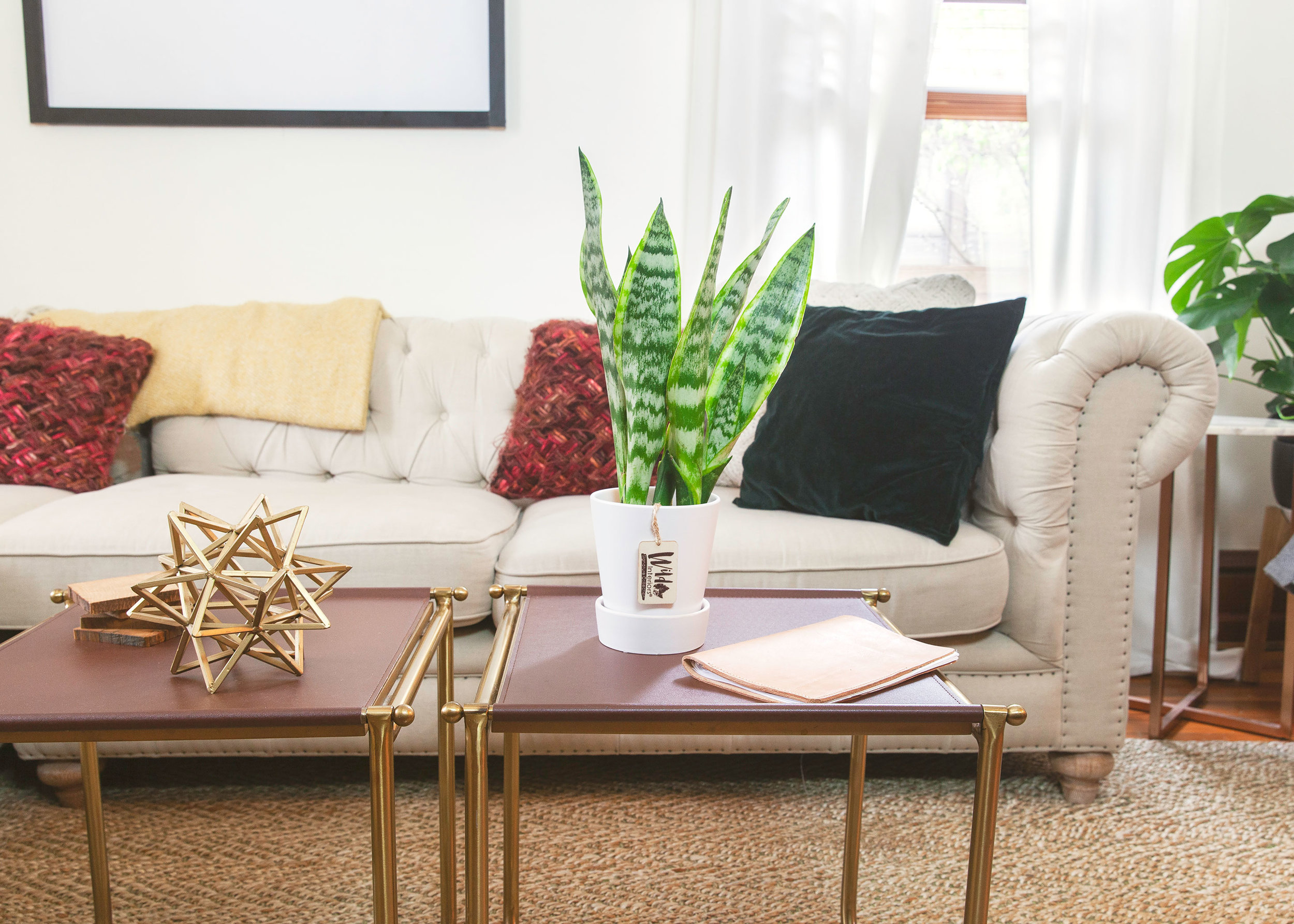How-to-Care-for-Sansevieria.jpg