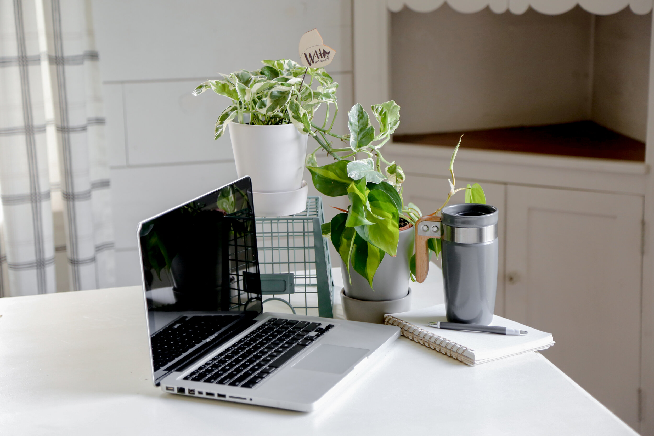 Wild Interiors Use Plants To Increase Workplace Productivity