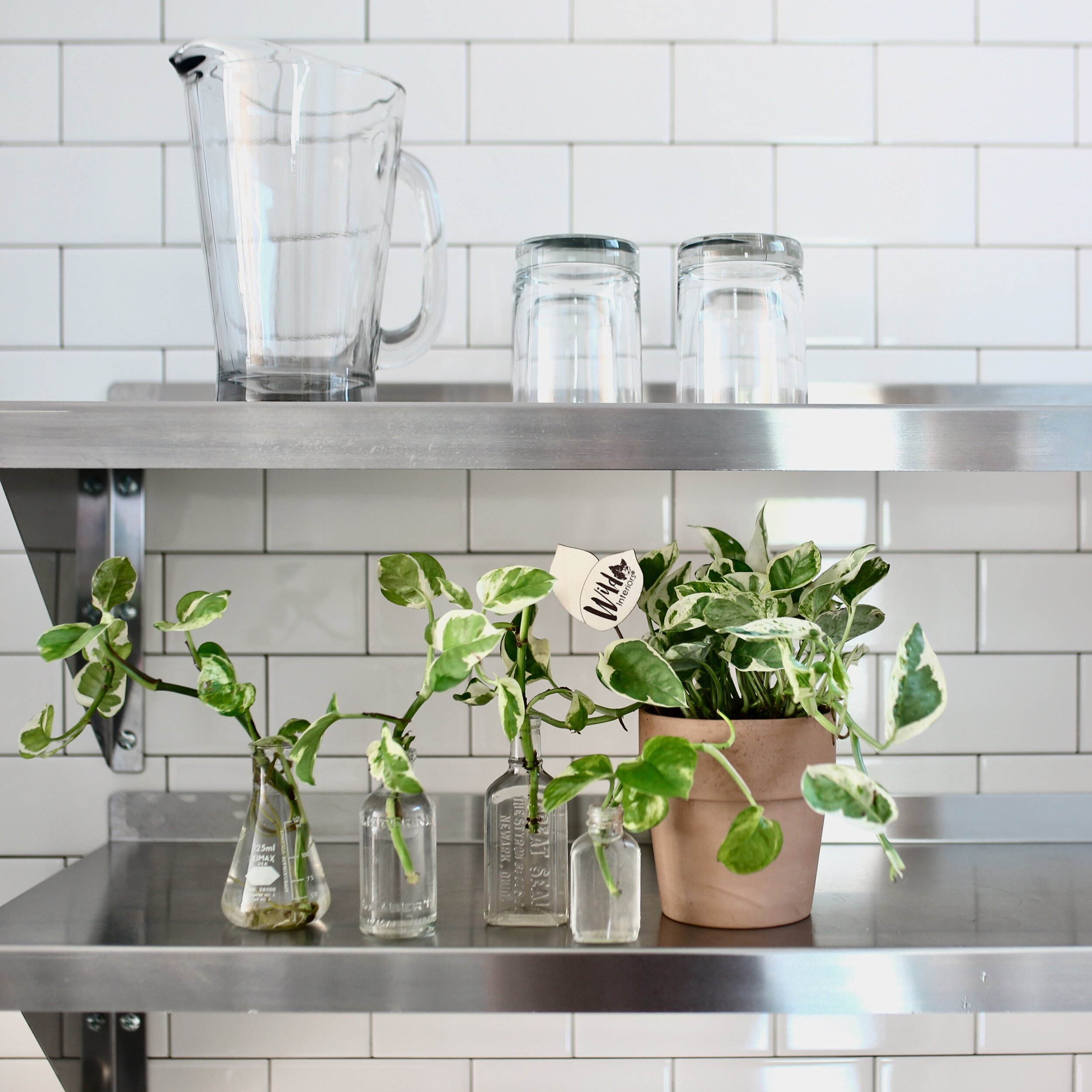 Wild Interiors How To Propagate Plants A Beginner S Guide