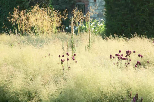 deschampsia poetics small.jpg
