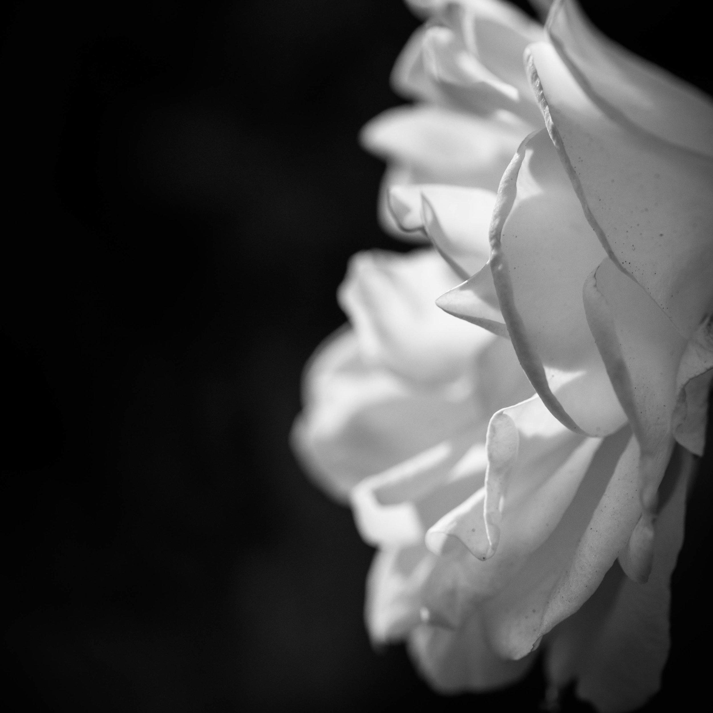 California Flowers-1.jpg