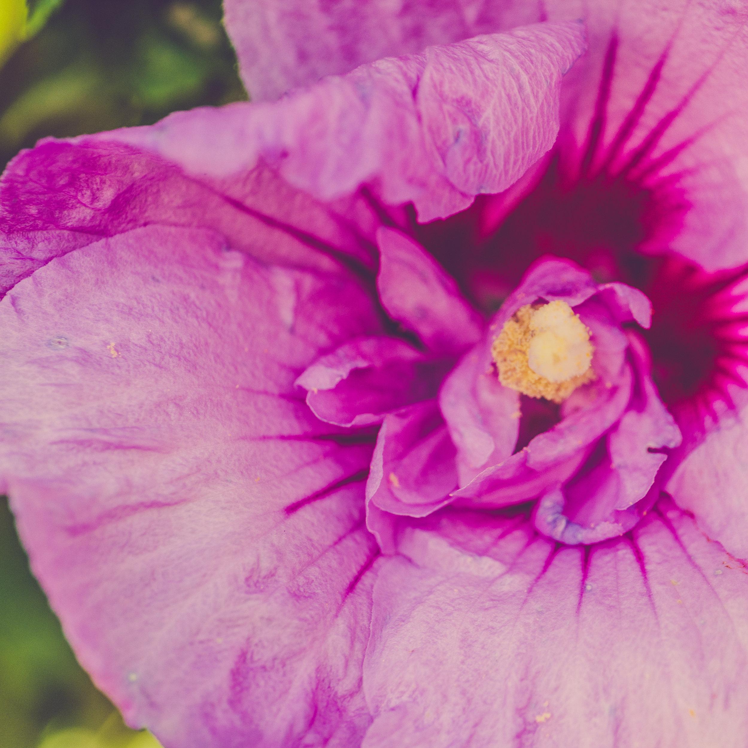ThePaintedSquare_ErnstTrail_Flowers-4.jpg