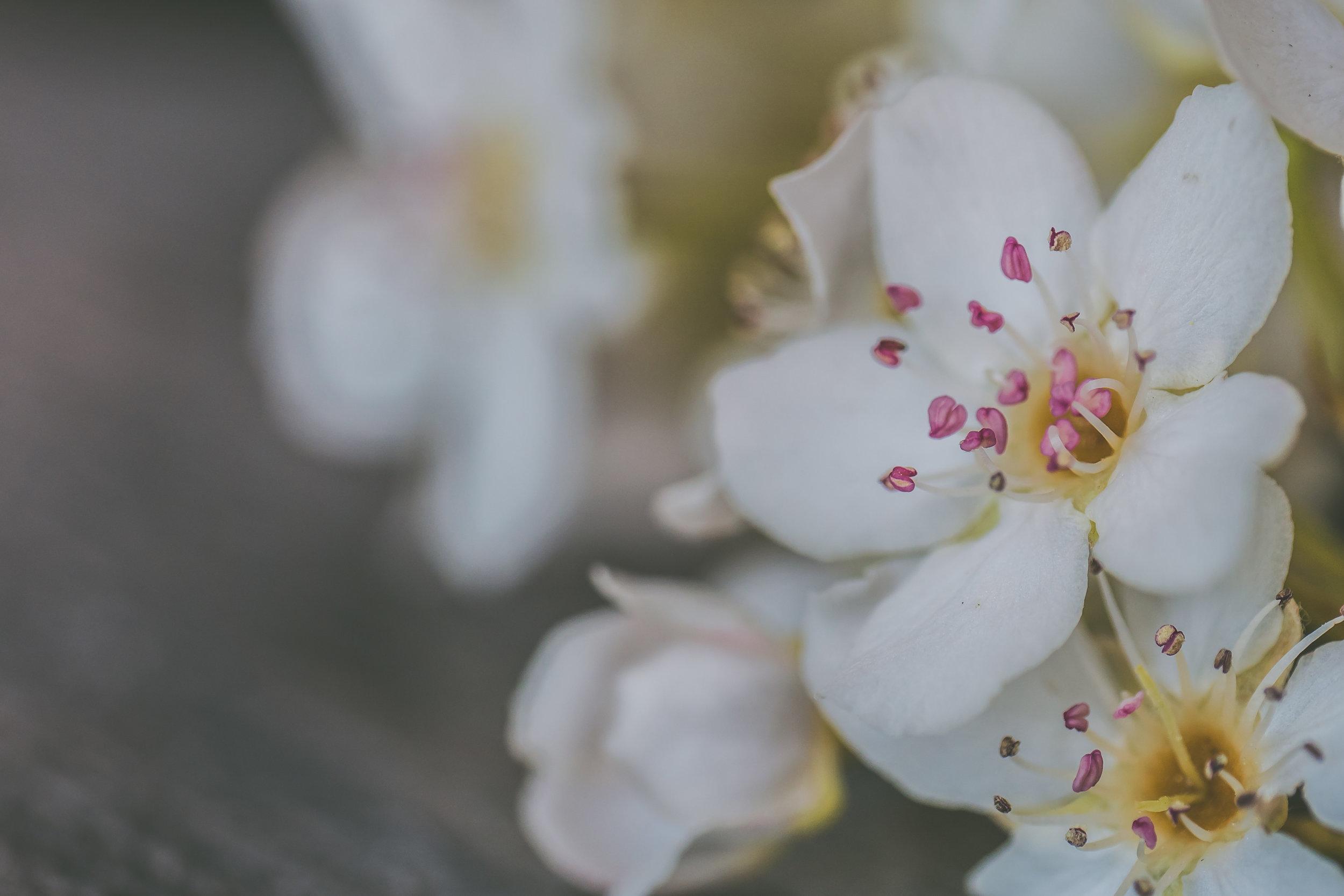 Spring Flowers Full Res-7.jpg