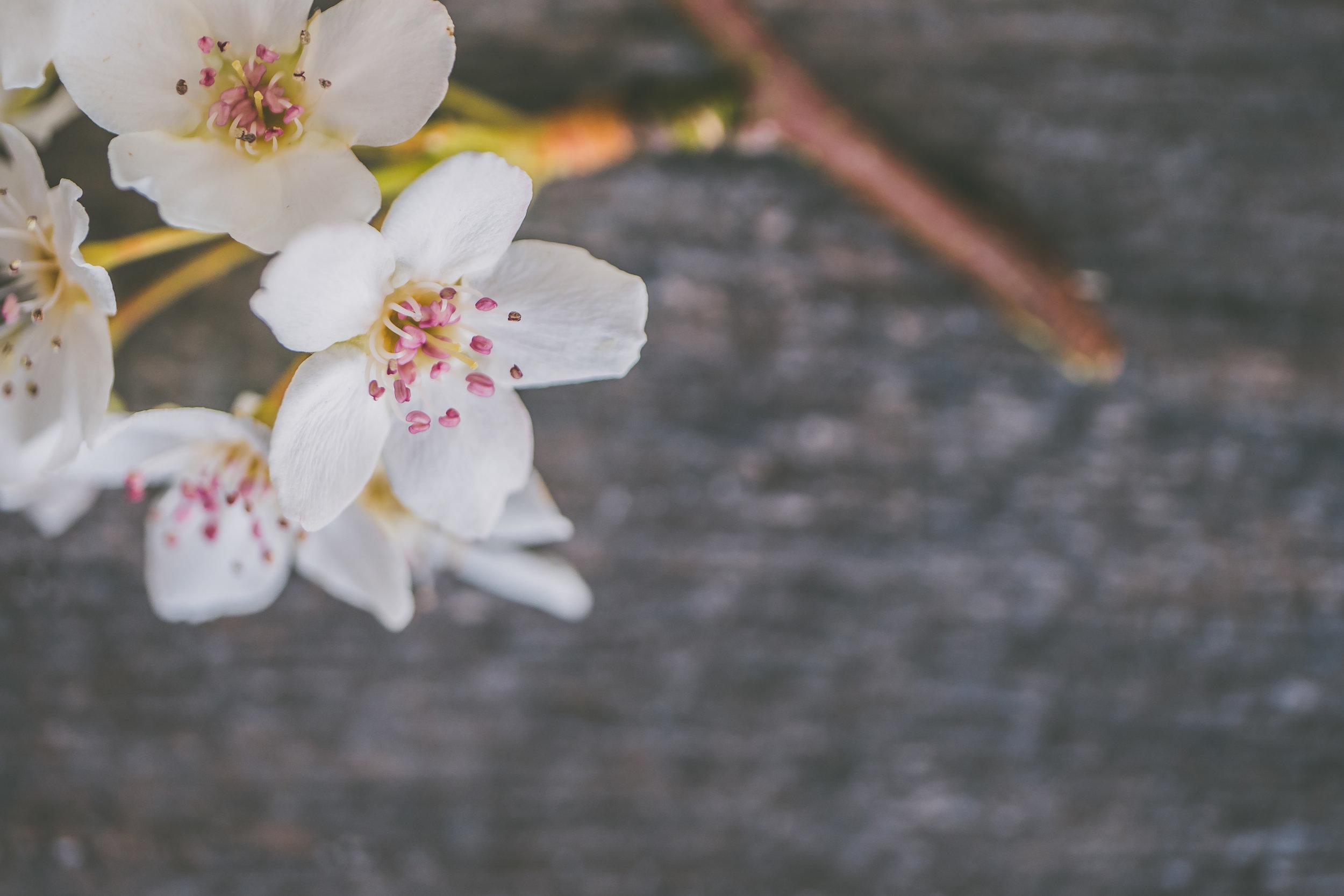 Spring Flowers Full Res-8.jpg