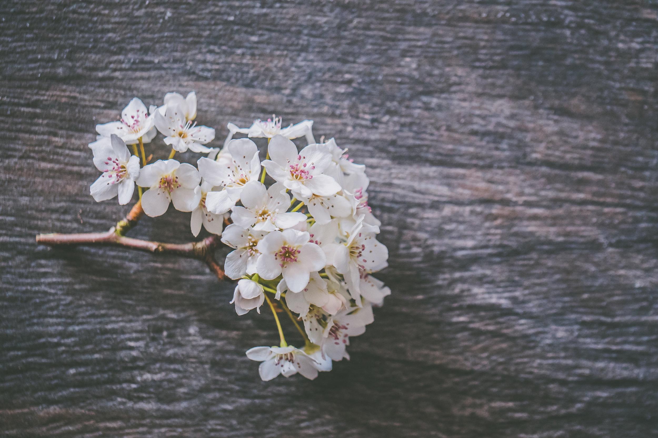 Spring Flowers Full Res-1.jpg
