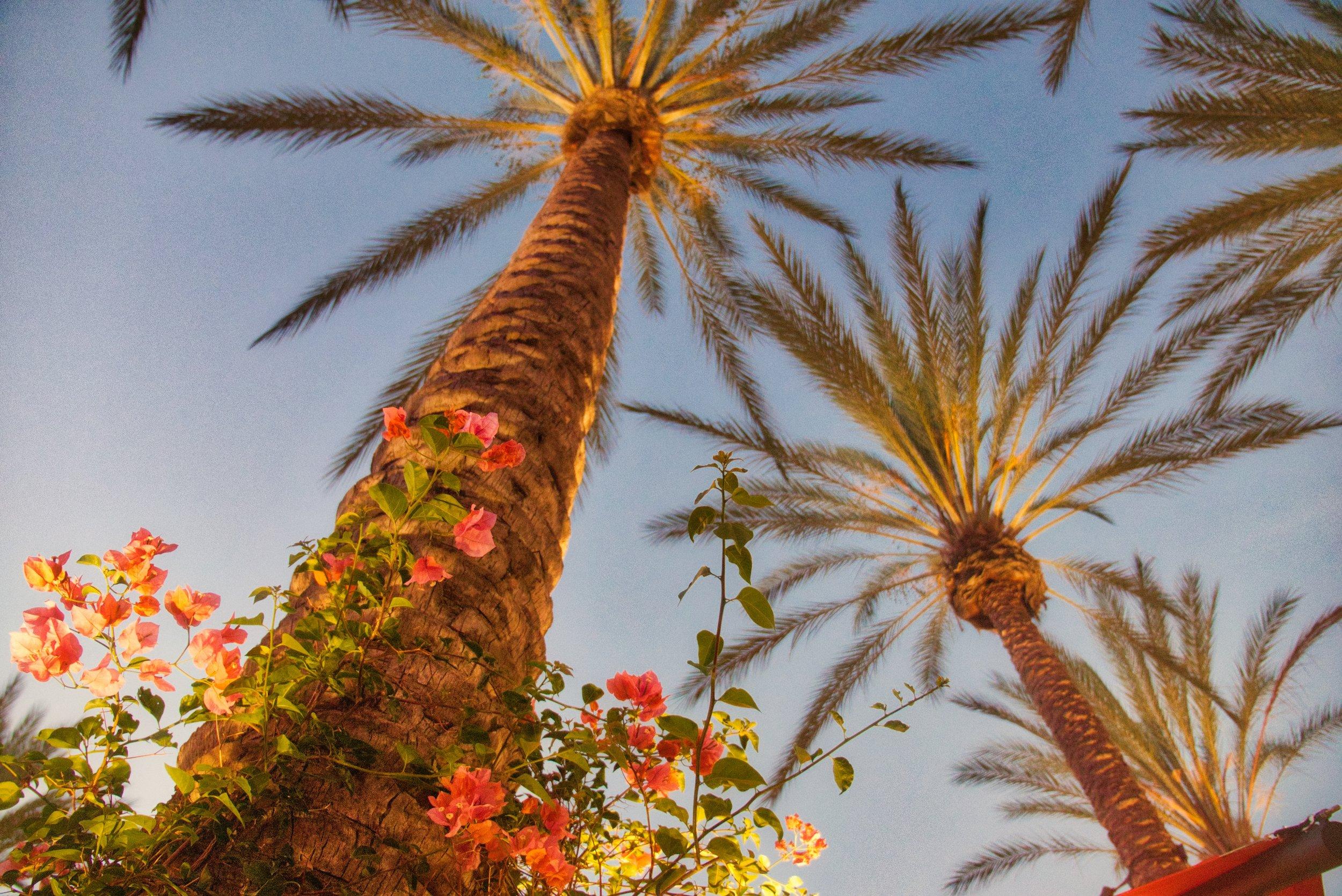 Irvine Spectrum Palms 5.jpeg